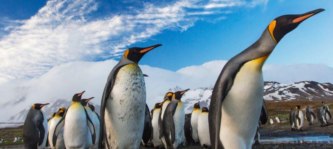Ostrov Fillipa - parad pingvinov